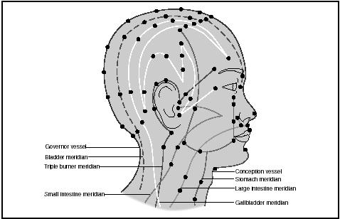 Acupuncture sites and meridians on the face and neck.  (Illustration by Hans & Cassady, Inc.)